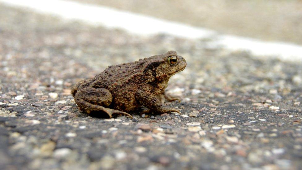 La autoridad local cree que el intenso tráfico amenaza la reproducción de la especie.