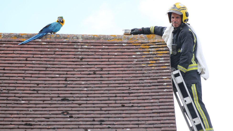 Parrot swears at London firefighter trying to rescue it from roof