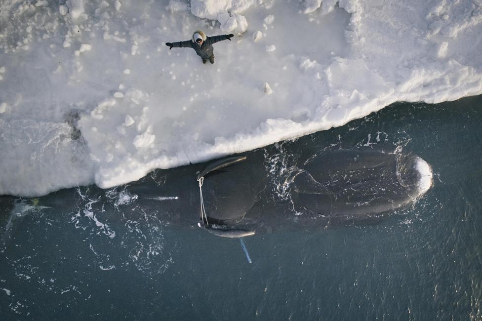 Flora Aiken bendice una ballena