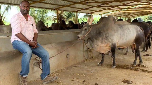 A bull sanctuary in Tamil Nadu