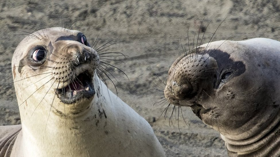 In Pictures: The Comedy Wildlife Photography Awards 2017