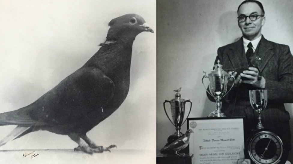 Exeter war hero pigeon Mary to get blue plaque