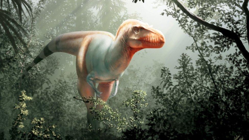 Como Era El Segador De La Muerte Una Nueva Especie De Dinosaurio Que Vivio Antes Que El Tyrannosaurus Rex Bbc News Mundo Este es un dinosaurio muy interesante que vivió a finales del periodo cretácico, hace 70 millones de. como era el segador de la muerte una nueva especie de dinosaurio que vivio antes que el tyrannosaurus rex bbc news mundo