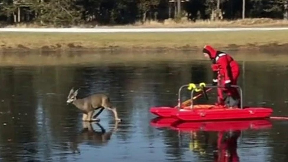 Bambi on ice: Deer rescued from frozen lake in Oregon