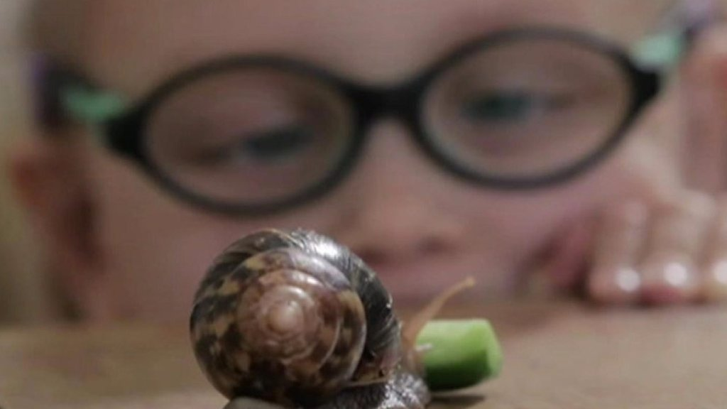 Would you swap your pet for a snail?