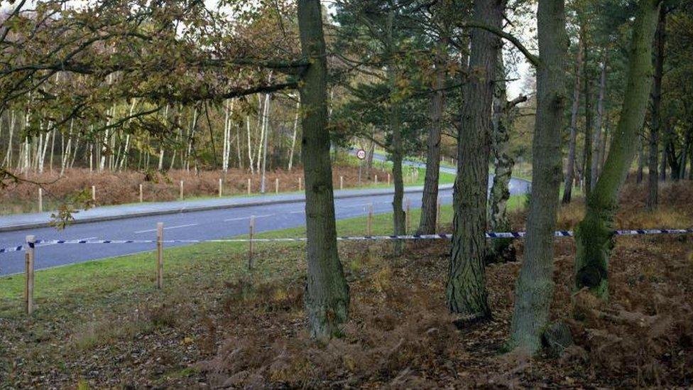 Deepcut woods