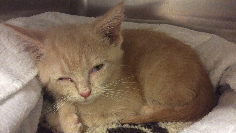 Burgess Hill man sentenced for fatally injuring kitten