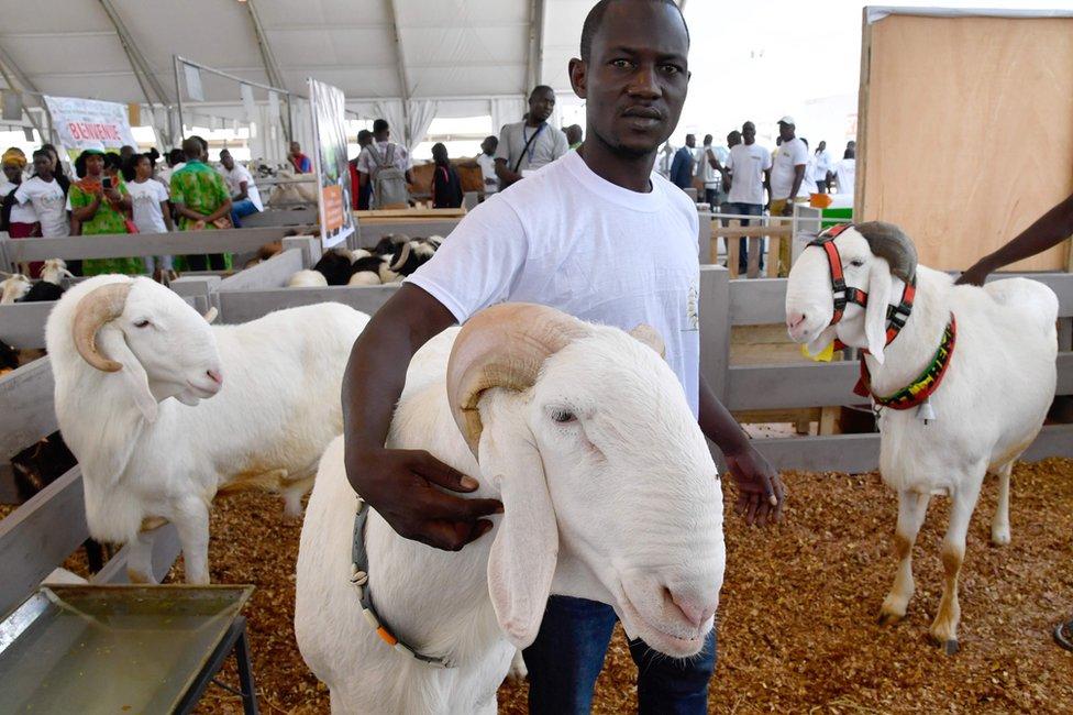 عُرضت أيضا أكباش من مالي المجاورة في المعرض السنوي الذي يهدف إلى تحسين أساليب الزراعة وتشجيع التجارة.