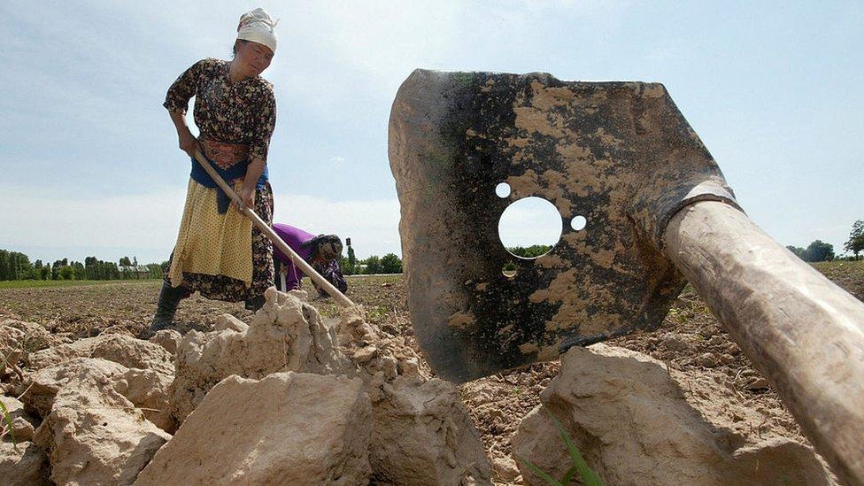 Una mujer trabaja en el campo en Uzbekistán.