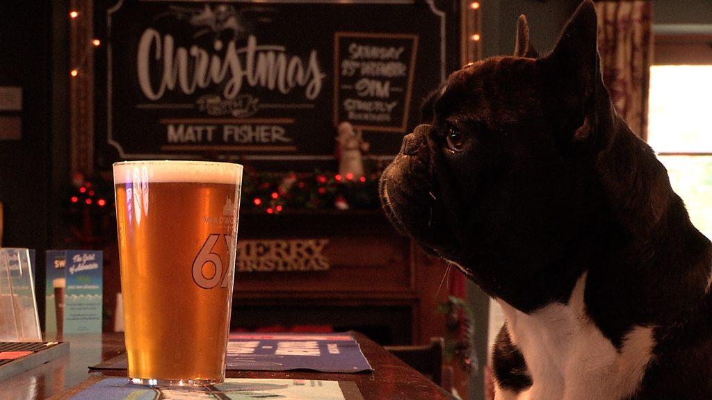 Fox and Hounds in Theale is Britain's most dog-friendly pub