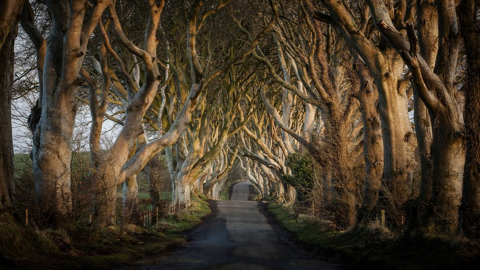 NI paper review: Dark Hedge tree sale and lost wedding ring