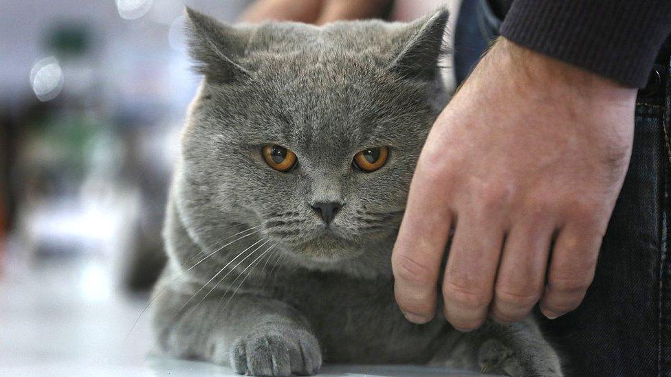 Київрада заборонила ловити безпритульних котів