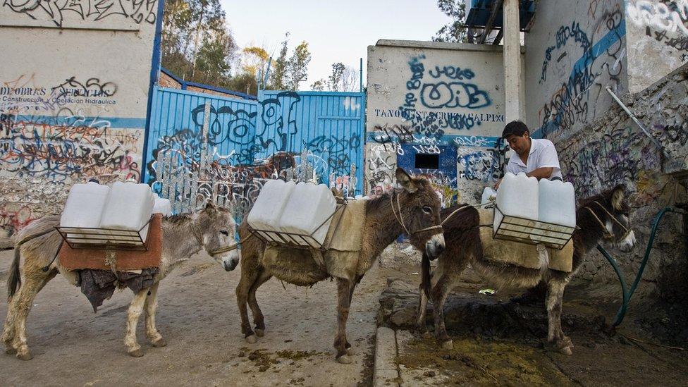 Burros cargando agua
