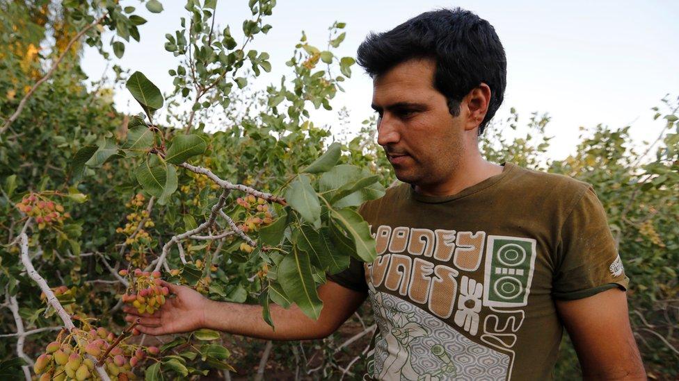 El pistacho iraní está tasado con un 241% de arancel para poder entrar en el mercado estadounidense.