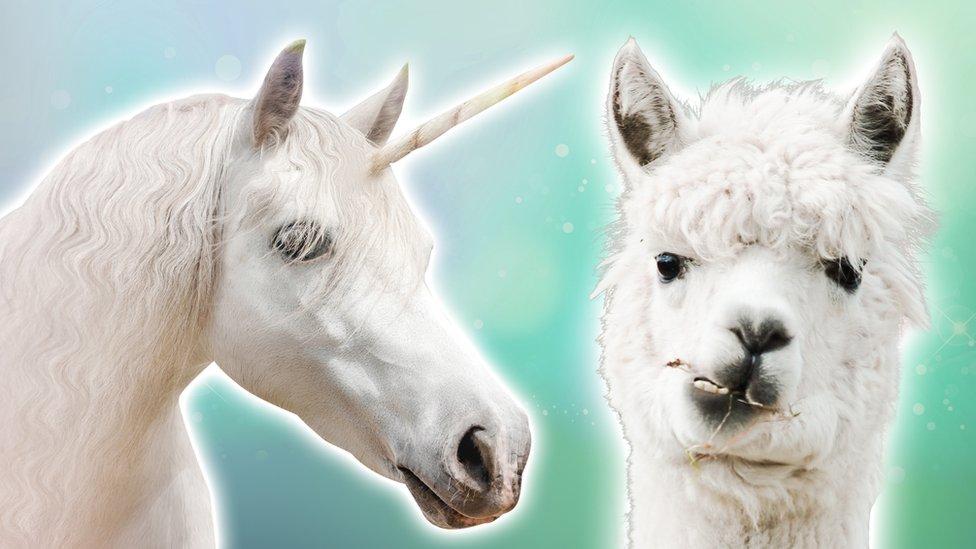 Are Llamas The New Unicorns?