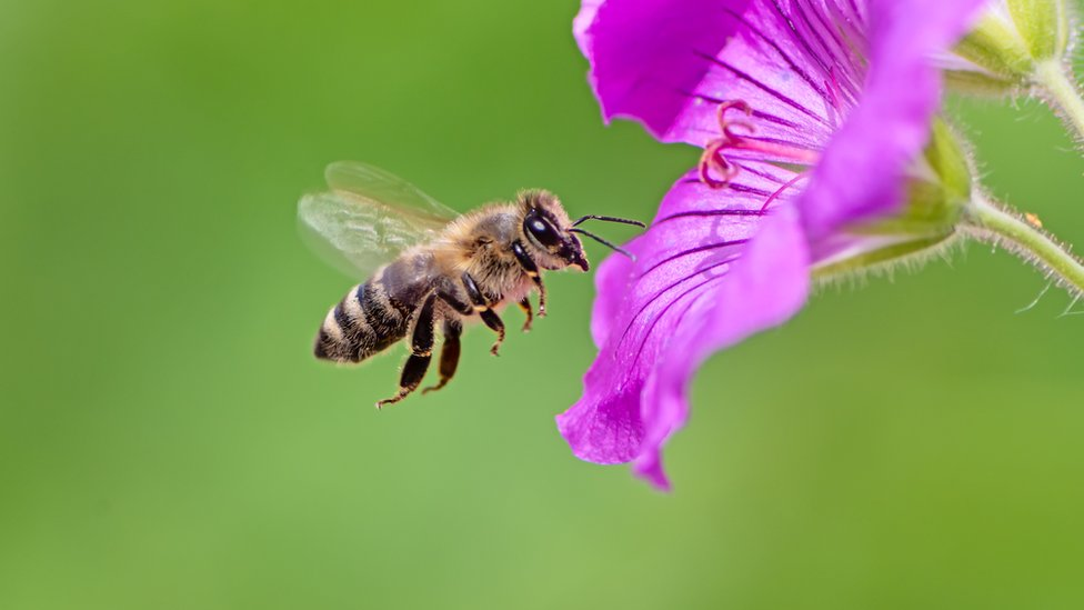 What can bees teach economists about how markets work?