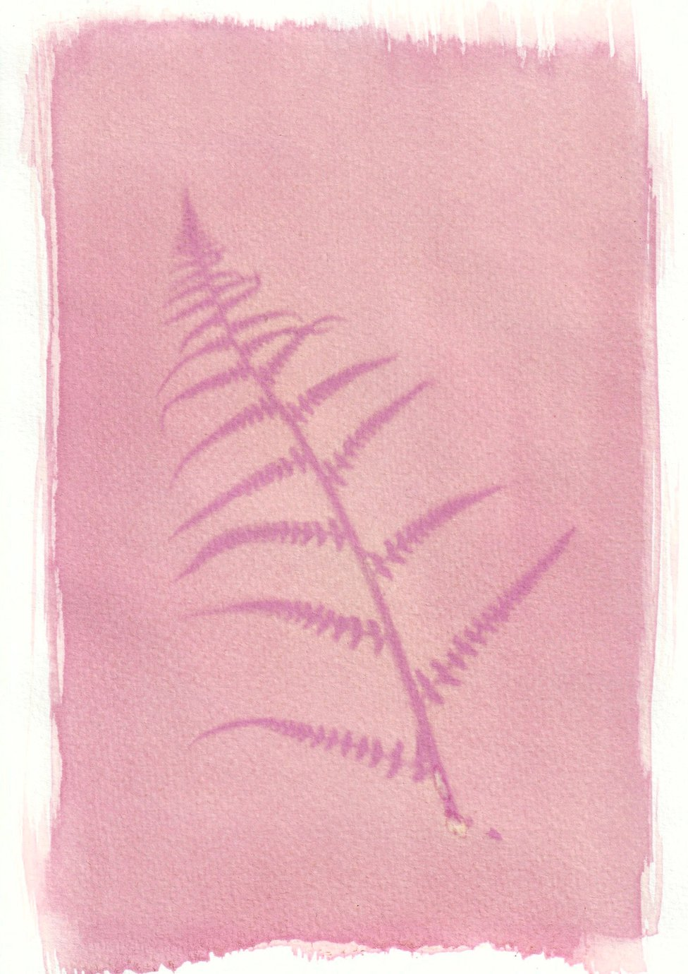 An anthotype print of a purple piece of bracken