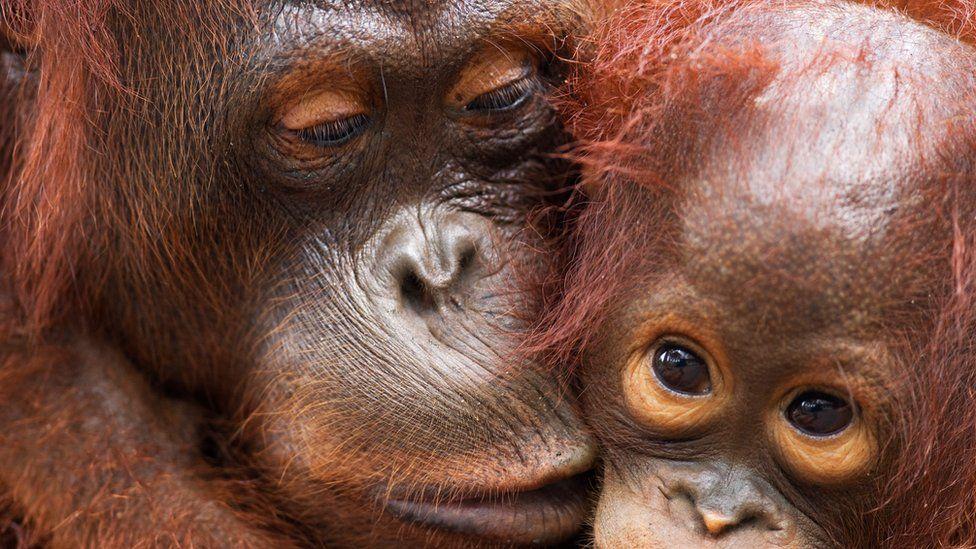 Los números no bastan para entender la situación de una especie. La duración del ciclo reproductivo y la distribución geográfica son también necesarios para estimar qué peligro corre una especie. Foto: WWF.