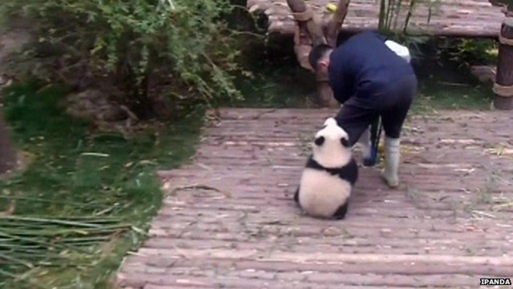Clingy panda video racks up 163m hits online