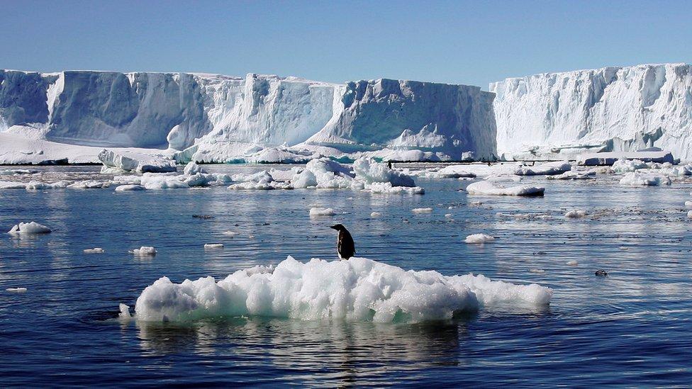 La mayoría de los restos de ADN pertenecen a especies de animales de la Antártica, pero otros no pudieron ser identificados.