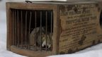 155-year-old trap catches mouse