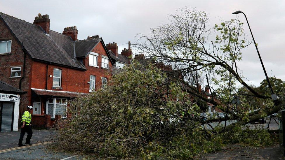 تسبب الإعصار في سقوط أشجار وتعطل حركة بعض الطرق