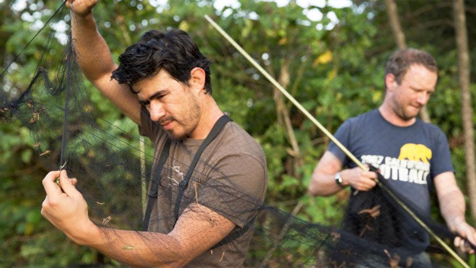 Alejandro Rico-Guevara extendiendo una malla para capturar colibríes en la selva