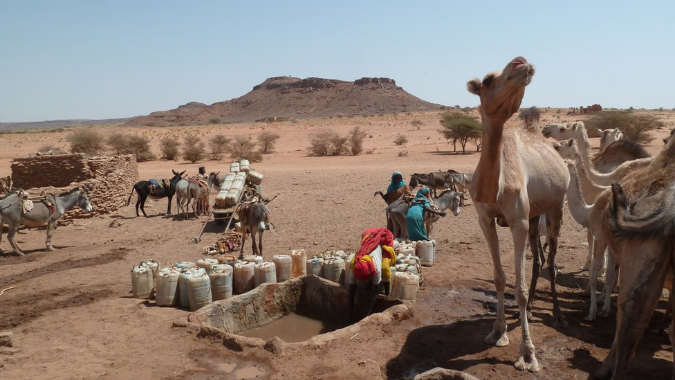 Camels at water hole in Sudan