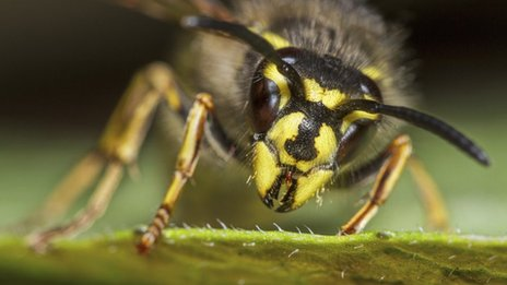Why do we hate wasps and love bees?