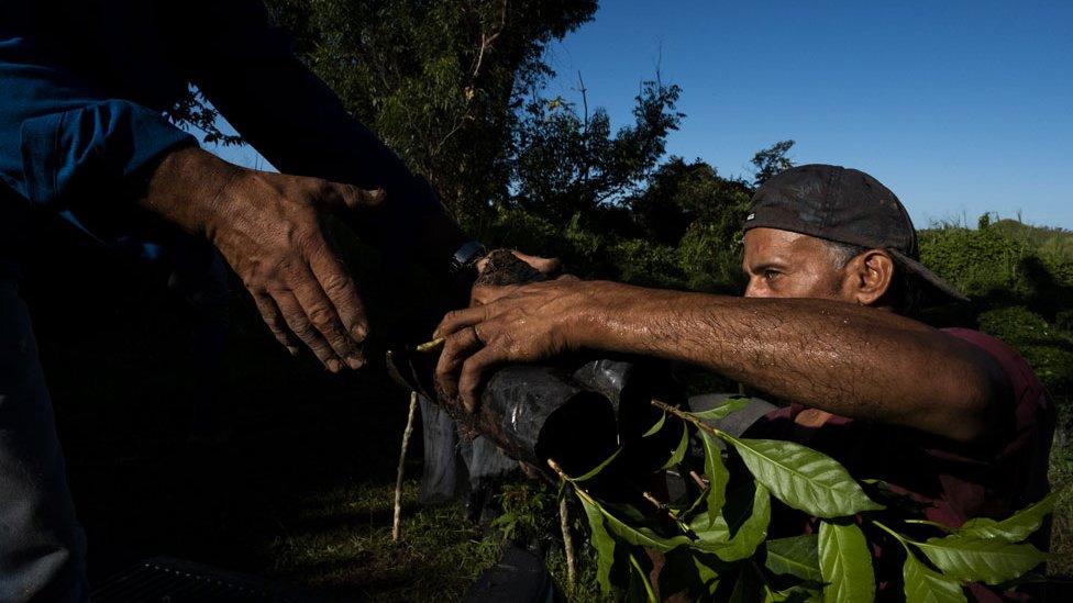 Rebuilding Puerto Rico's coffee market