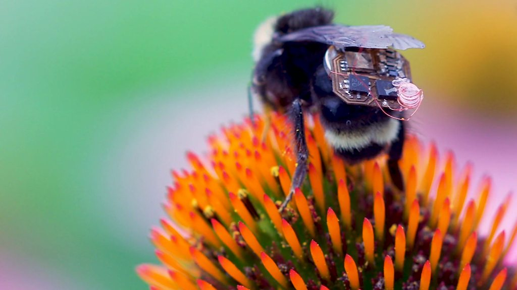Backpack bees give farmers a weather buzz and other news