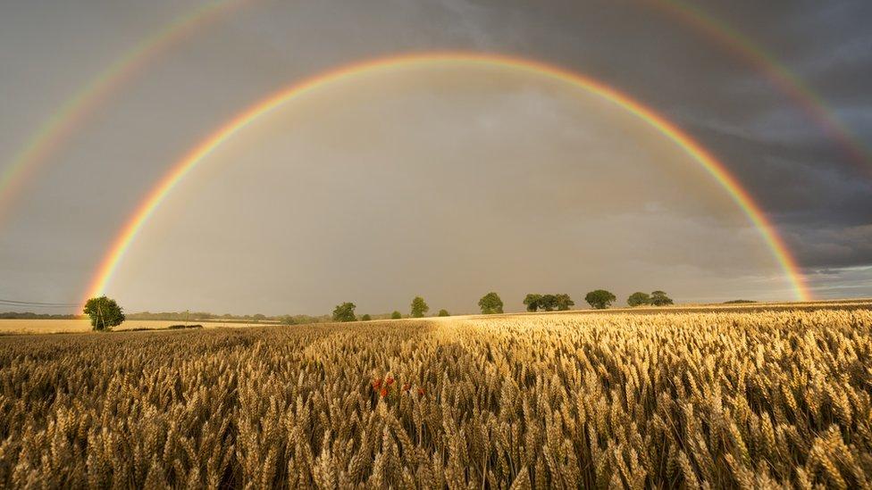 Campo de trigo con doble arco íris