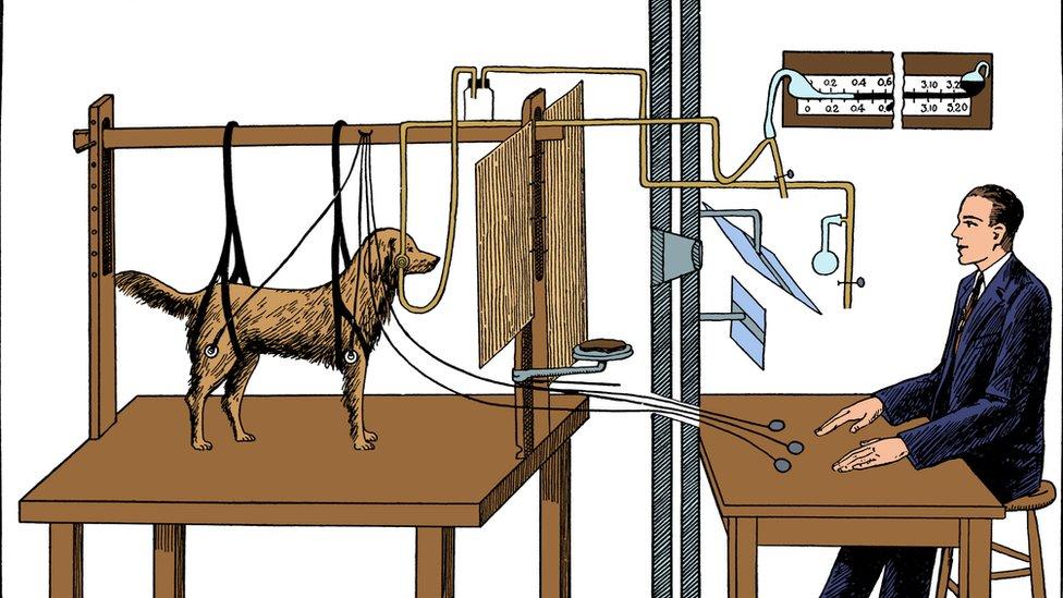 Ilustración de experimento de Pavlov