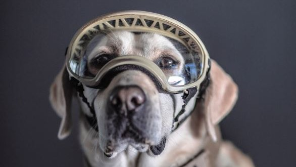 Mexicans hail 'hero dogs' as photographer tweets portraits
