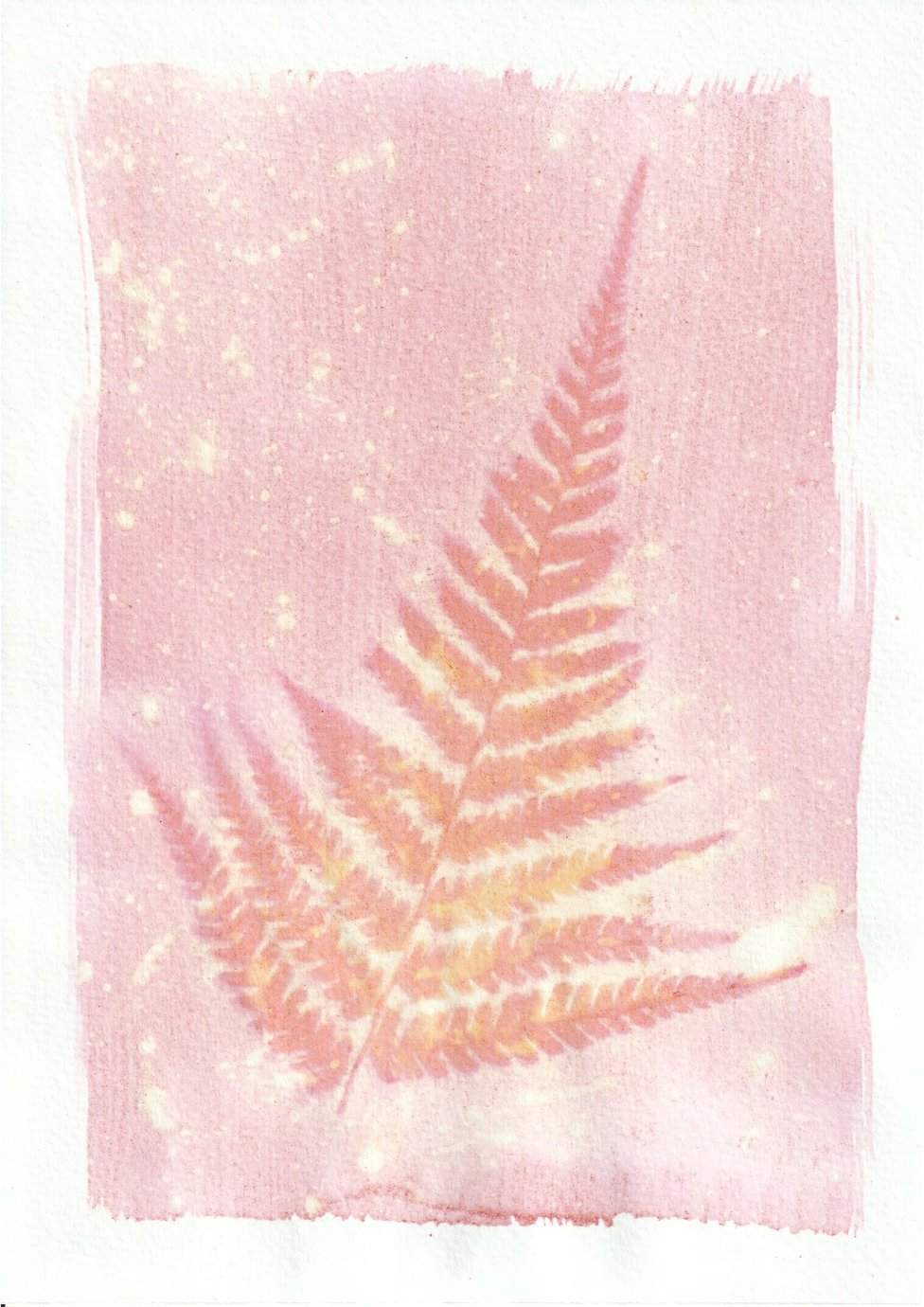 An anthotype print of a pink and orange leaf