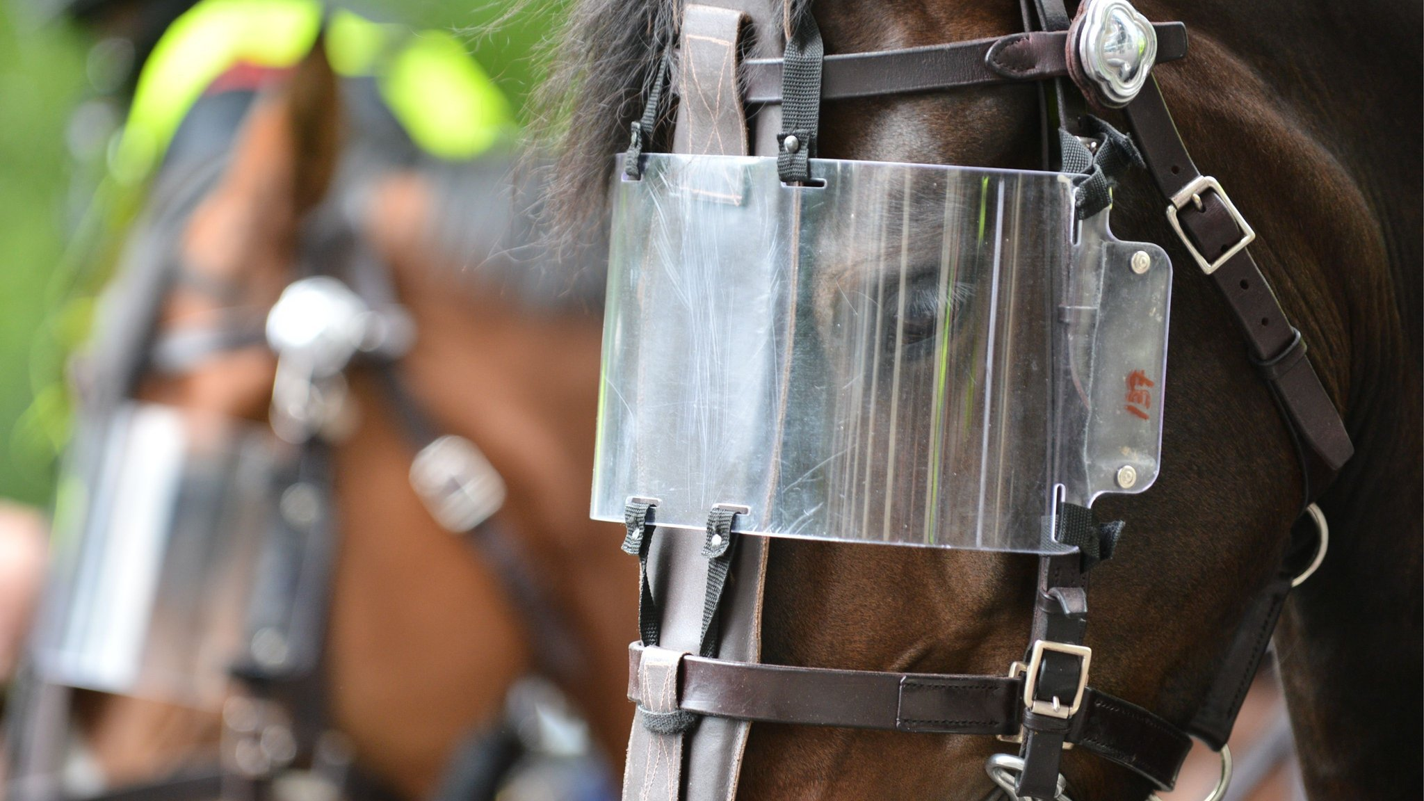 Celtic fan held for throwing burger at police horse