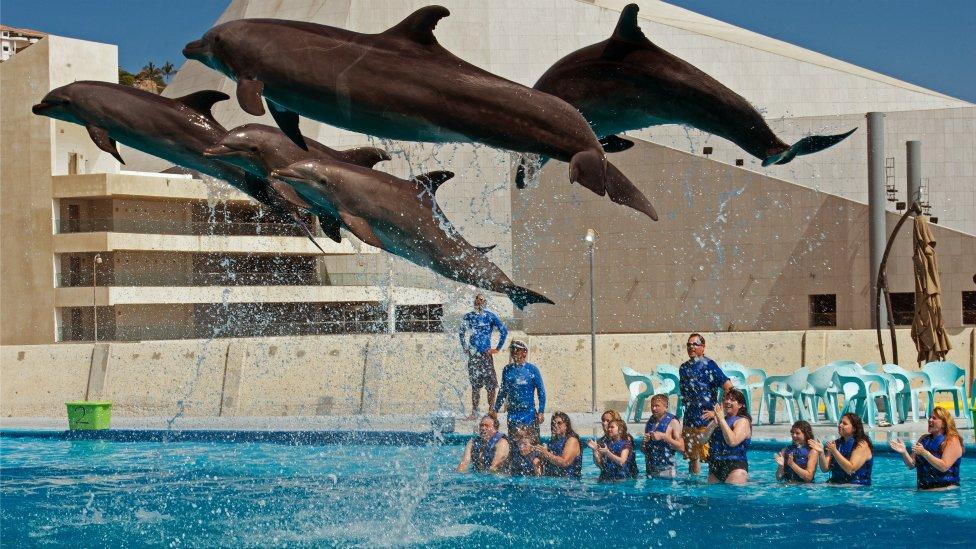 Delfines en un acuario de Los Cabos, Baja California Sur, México.