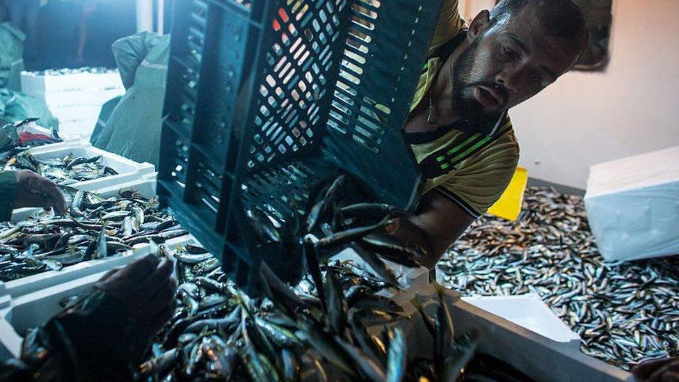 La pesca solo contribuye al 1,2% de la producción mundial de calorías para el consumo humano, según los investigadores.