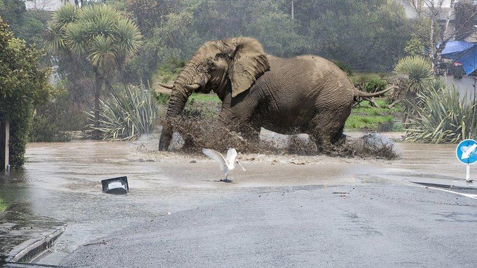 Christchurch floods inspire Photoshop fun