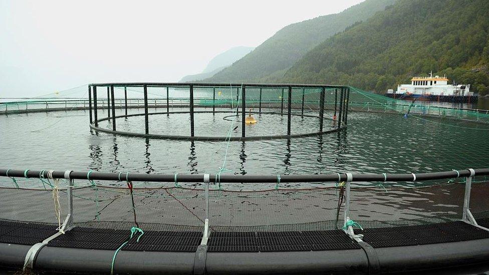 Noruega es el mayor productor mundial de salmón.