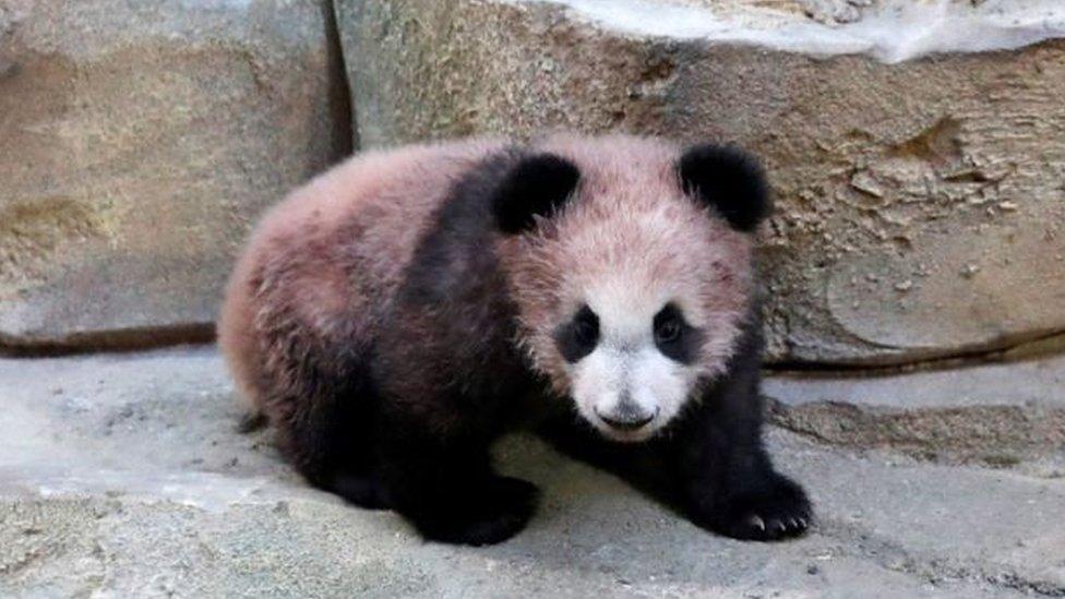 Bayi Panda