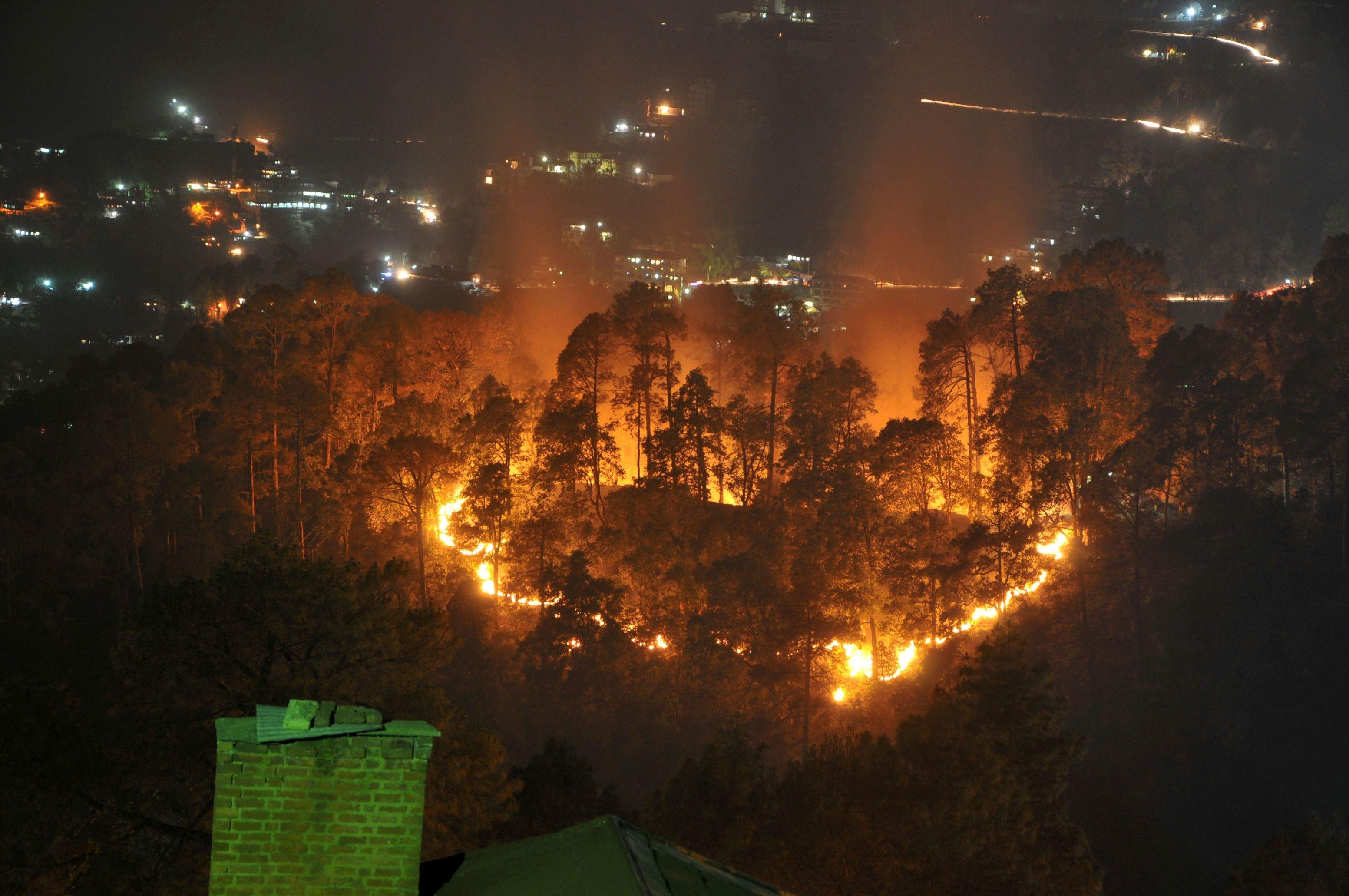 Burning forest in Uttarakhand