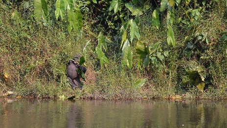 Man of the forest, Lefini, Republic of Congo