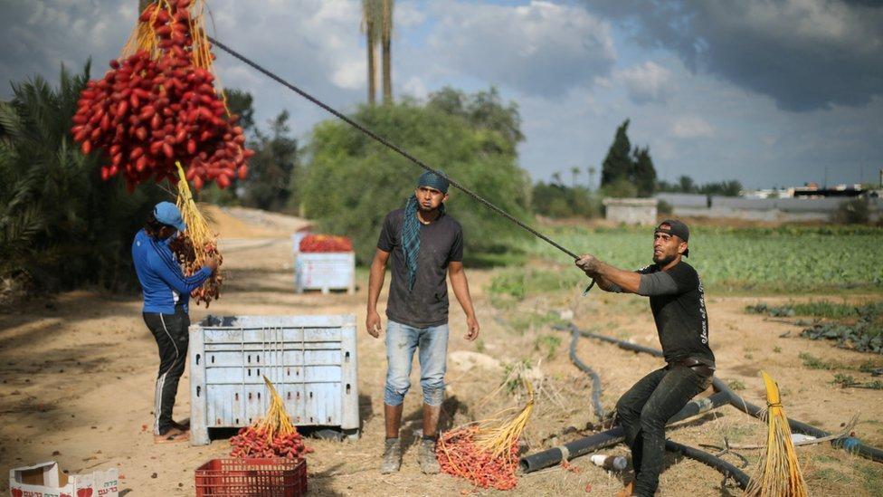 Palestina, Gaza, Hamas, Fatah
