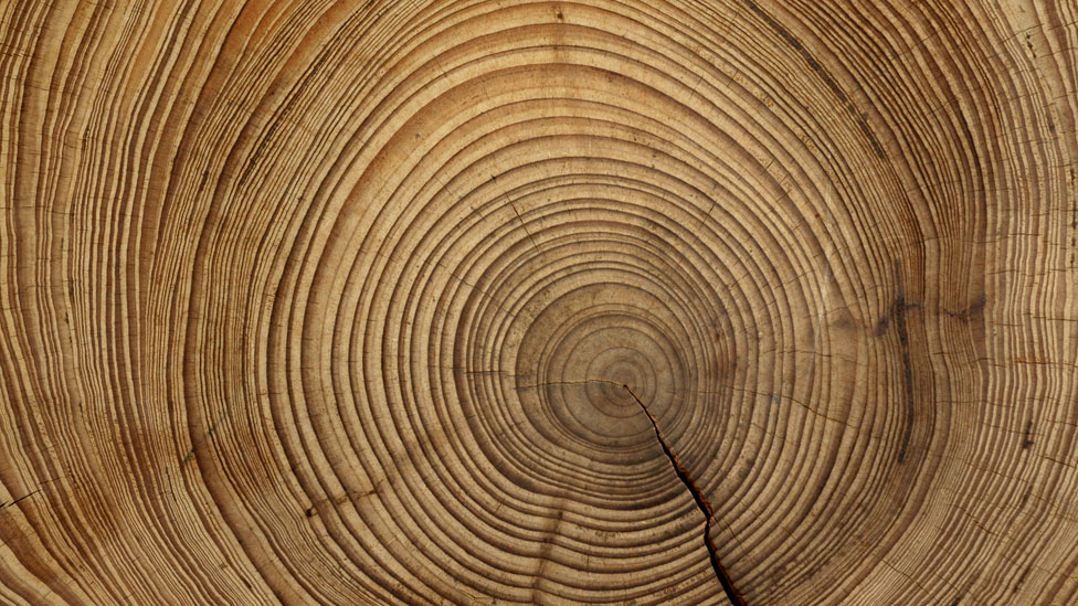 Corte mostrando los anillos de un tronco