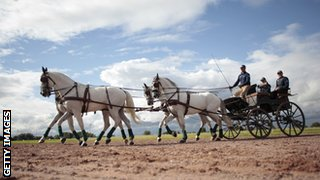 carriage driving horses