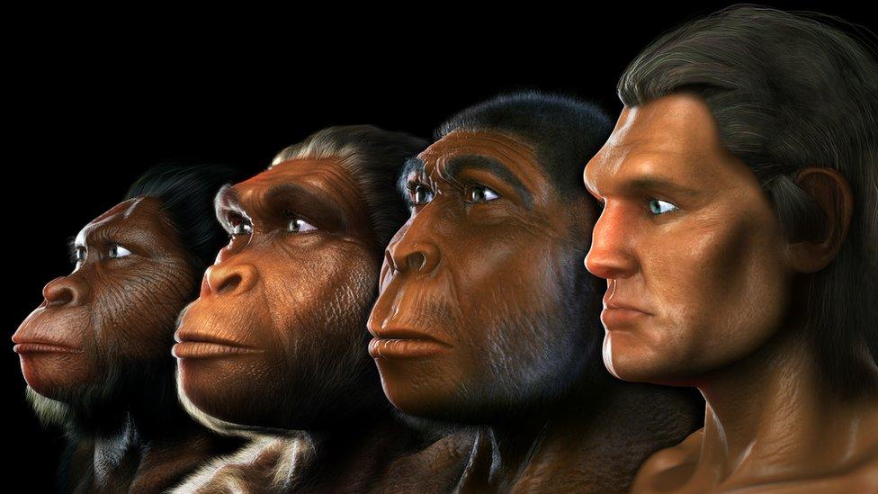 Выявлен ранее неизвестный предок человека. Его нашел искусственный интеллект