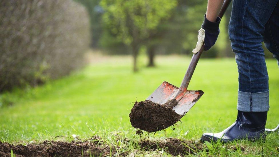 Gardener digging hole in lawn