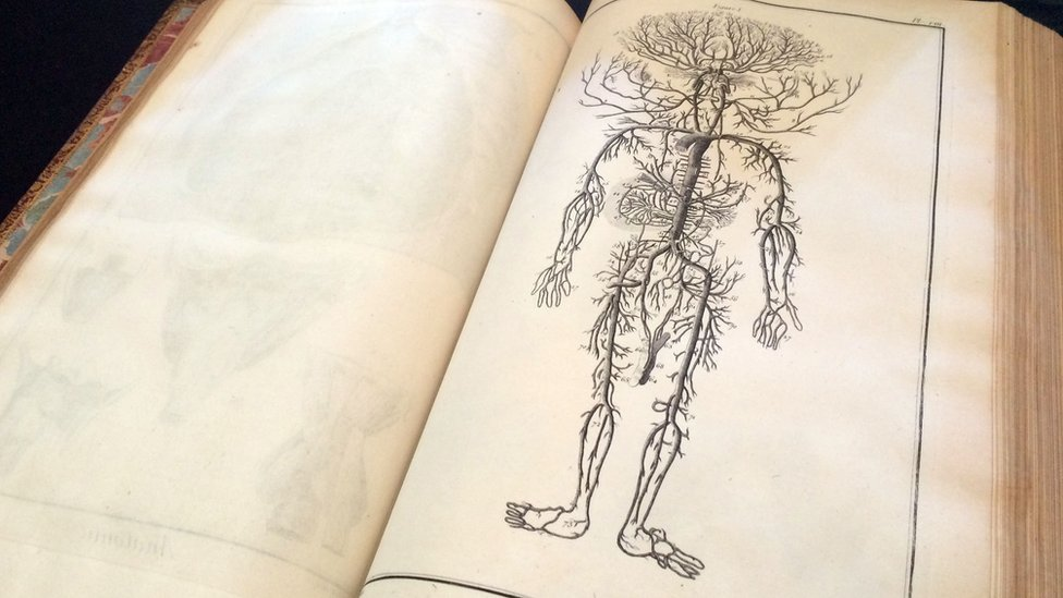 Cómo nació el libro que marcó el estudio del cuerpo humano   Tele 13