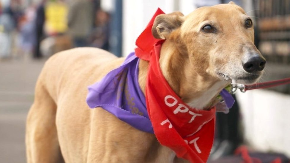 Fresh calls for end to greyhound racing in Scotland